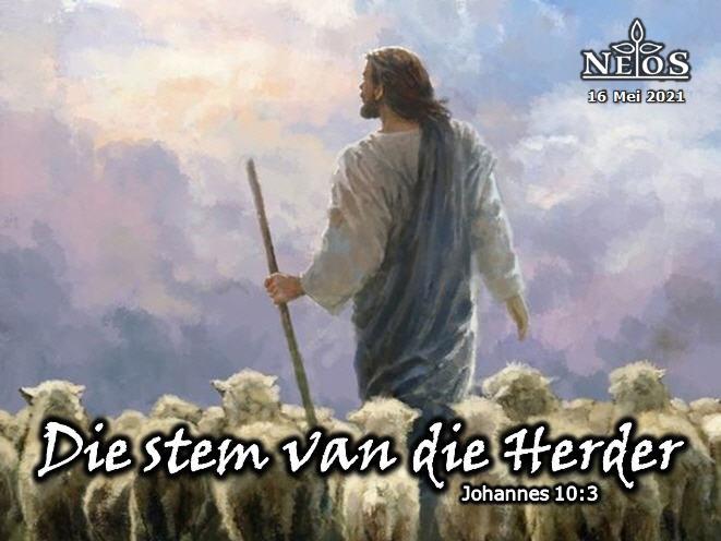 Die stem van die herder